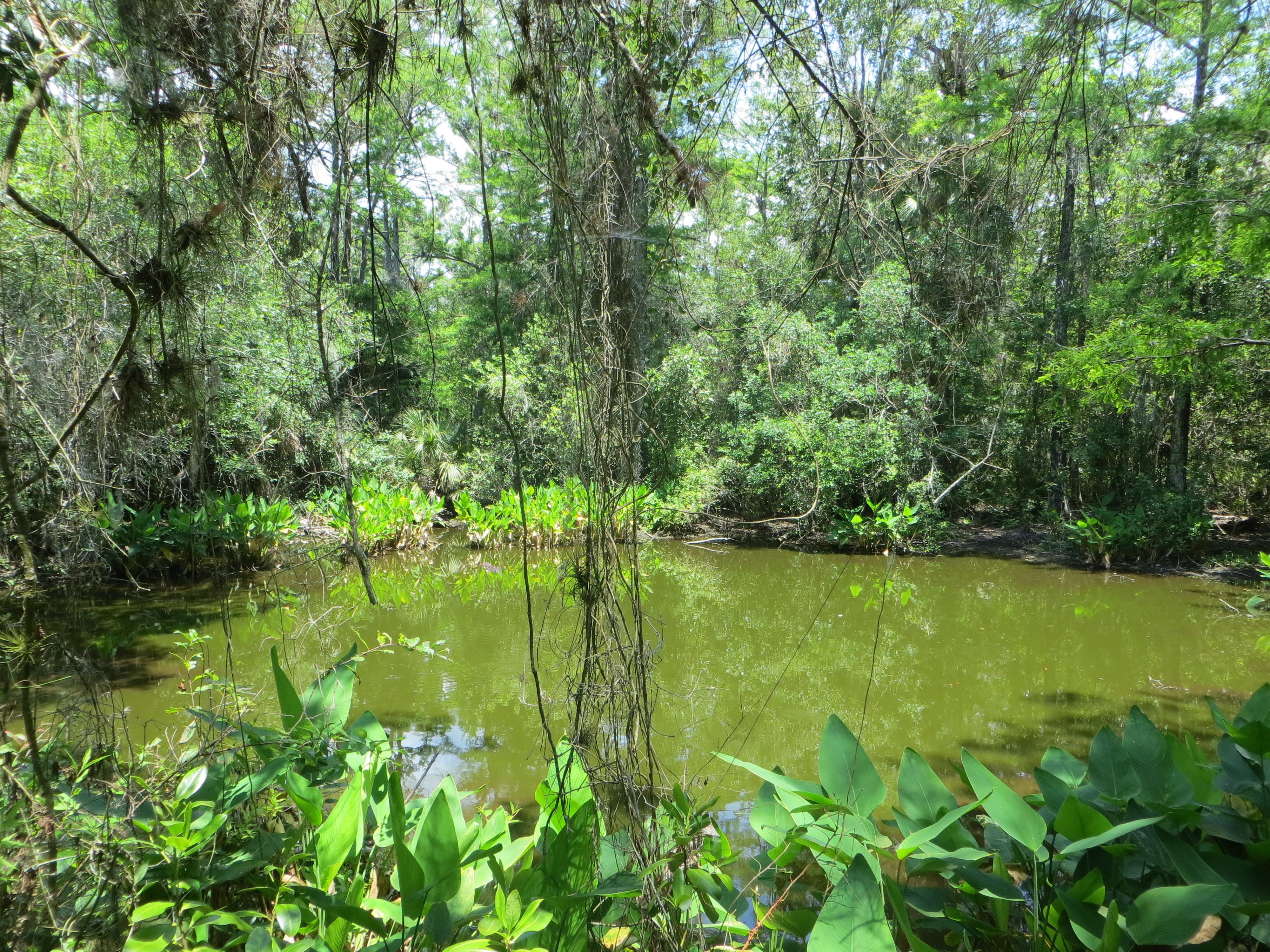 Ein idyllisches Biotop im Big Cypress National Preserve