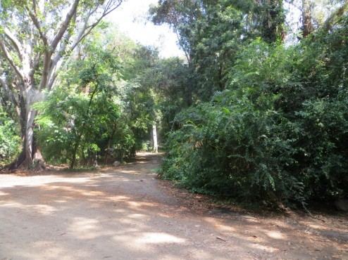 In diesem Dschungelgebiet wurde unter anderem für Jurassic Park gedreht