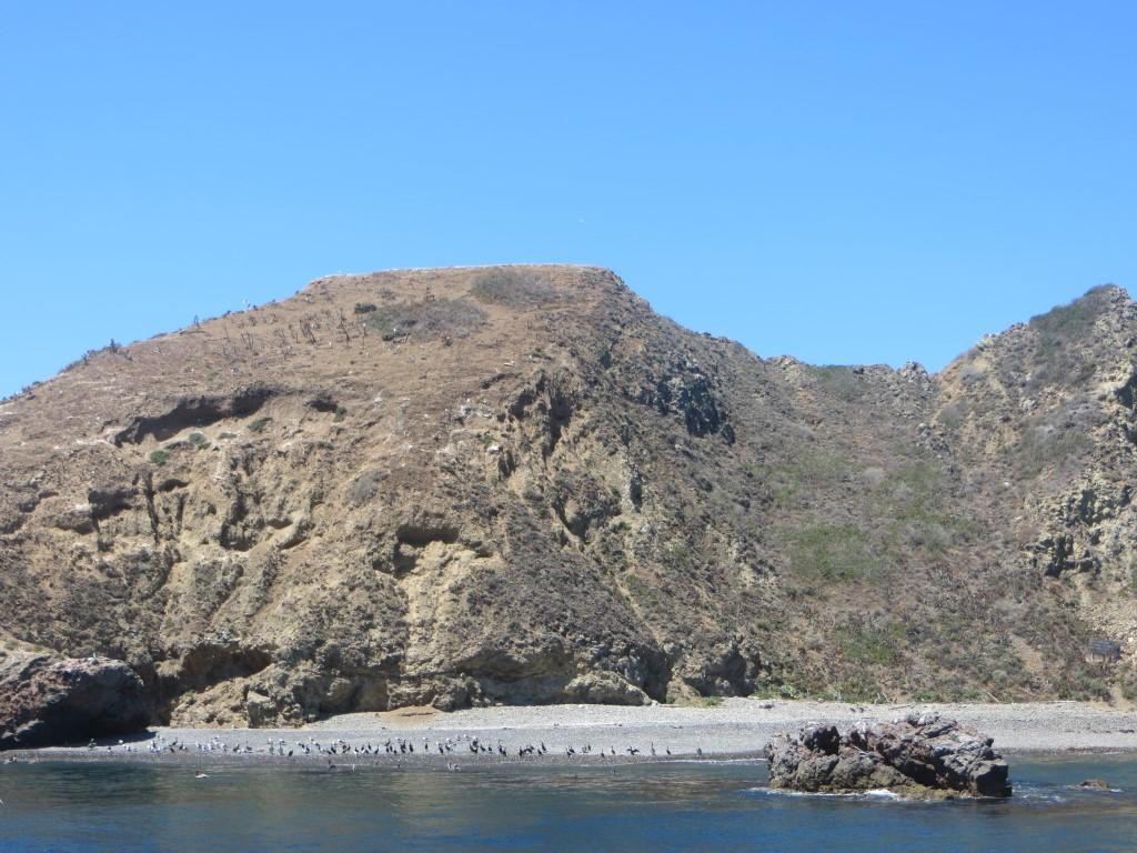 In den Anacapca-Nationalpark kommen zahlreiche Seevögel um ihren Nachwuchs aufzuziehen